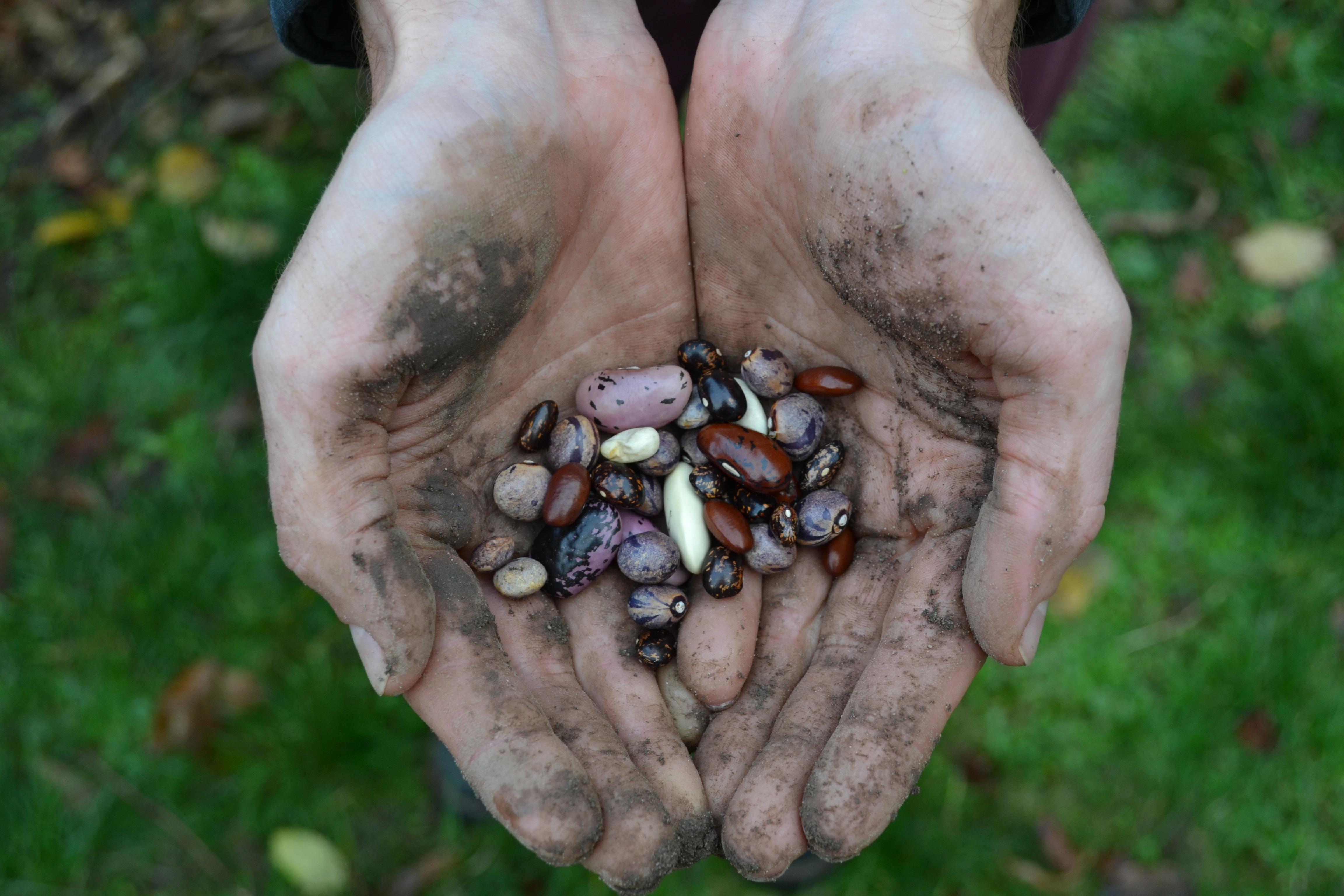 Das Ergebnis eines Jahrtausende-währenden Selektionsprozesses: unser Saatgut.