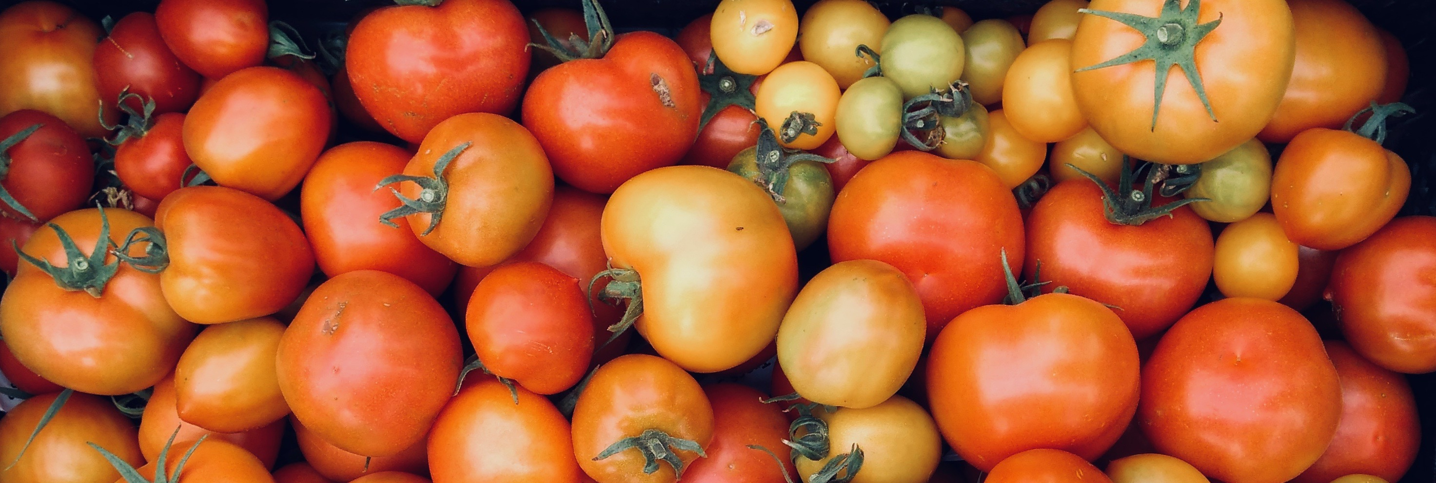 Tomaten-Vielfalt