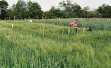 Bild: Menschen in einem Getreidefeld